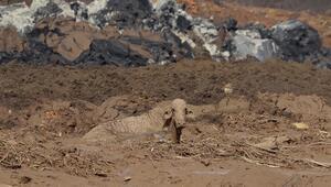 Brezilyada çöken barajın sorumluları gözaltına alındı