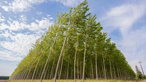 Finlandiya selüloz üretiminde rekor kırdı