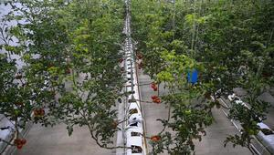 Sera paketi tarım için büyük fırsat