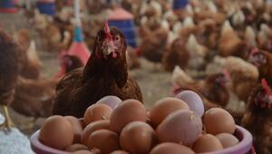 Tavuk eti ve yumurta üretimi arttı