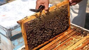 Arı yetiştiricilerinden mazot desteği talebi