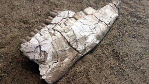 Kayserinin 7,5 milyon yıllık fosilleri sergileniyor