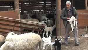 Devletten aldığı destekle koyun sürüsü sahibi bile olmuştu ama…