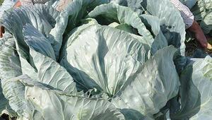 Mart'ta yüzde 29.52 ile en çok lahananın fiyatı arttı