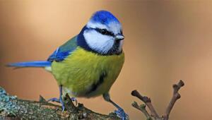 Ne kadar kuş, o kadar mutluluk