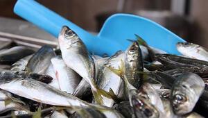 Balıkçılar hamsi ve istavritte umduğunu bulamadı