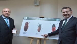 Balıkesirde keşfedilen 3 yeni böcek türü tanıtıldı