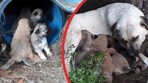 Yine zehirli et katliamı 4 köpek ve 3 kedi öldü