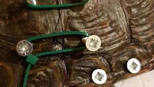 Batmanda bulunan kabuğu kırık kaplumbağaya İstanbulda tedavi