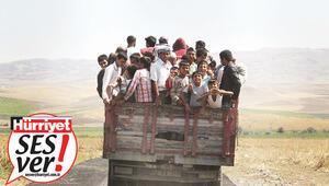 Dram mevsimi... Mevsimlik işçilerin emek göçü başladı