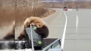 Rusyada bir ayı kamyonet kasasından alet çantası çaldı