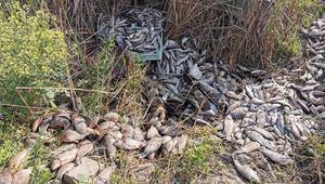 1 ton balığı, piknik alanına bırakıp kaçtılar