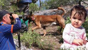 Her yerde aranıyor Kadavra arama köpekleri devreye girdi