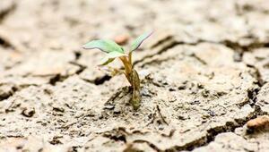 Marsta bile canlı kalabilen dünyanın en dayanıklı bitkileri