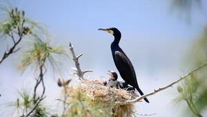 Saklı cennette kuş sayısında rekor artış