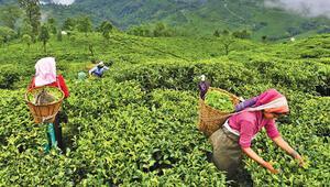 Dünyanın en büyük üretici ülkeleri  bile bizim kadar çay içmiyor