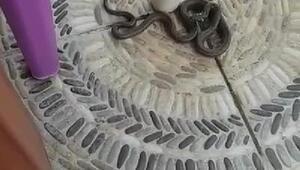Sultangazide yılanlar evlere kadar girdi