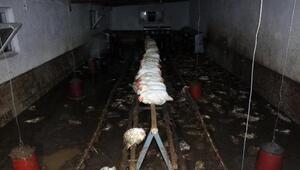 Yozgatta sağanak nedeniyle dereler taştı, seralar su altında kaldı