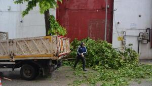 Bilecik'te yoğun yağıştan ağaç devrildi
