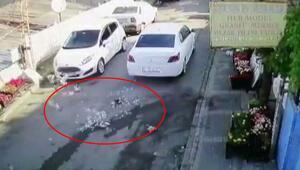 Vicdansız sürücü komşusunun beslediği kuşları aracıyla böyle ezdi