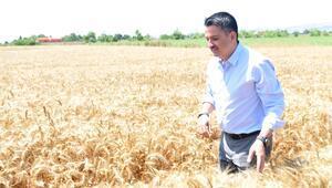 Bakan Pakdemirli, Büyükçekmecede buğday hasadı yaptı
