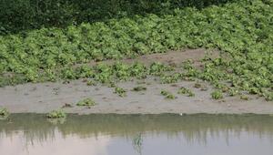 Ekili alanlar hasar gördü