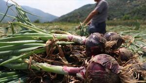 Sadece Erdekte üretiliyor Avrupa, Arap ve Orta Doğu ülkelerinden talep yağıyor