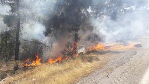 Son dakika... Silifkede orman yangını