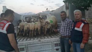 Hayvan hırsızlarını özel ekip yakaladı