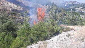 Hatayda bahçe temizliği sırasında yangın