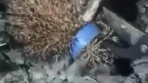 Kafası plastik şişe kapağına sıkışan kirpi kurtarıldı