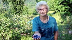 Mavi yemiş yetiştiren emekli doktor, siparişlere yetişemiyor