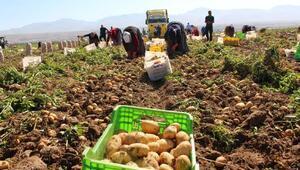 Niğdede patates hasadı başladı