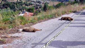 Kablo koptu 10 koyun öldü