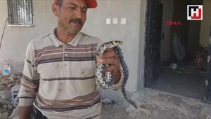 Eve giren yılanı elleriyle yakalayıp, doğaya bıraktı