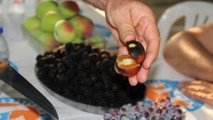 İlk defa üretildi… Bu domateslerin dışı çok farklı lezzeti ise…
