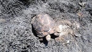 İtfaiyenin müdahalesi kaplumbağayı hayata bağladı