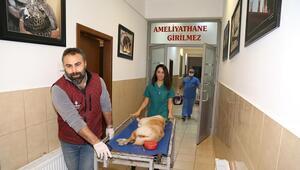 40 bin 403 sokak  hayvanı tedavi edildi