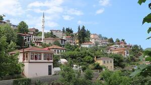 Doğu Karadenizin Safranbolusu: Trabzon Ortamahalle