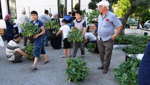 Yalovada 3 bin patlıcan fidesi dağıtıldı