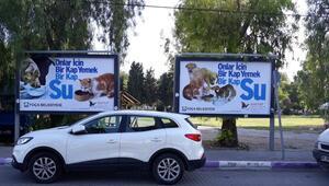 İzmirli belediyelerden sokak hayvanları için seferberlik