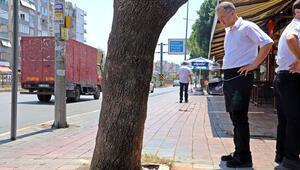 Antalyada 30 yıllık çınar ağacına asit döküldüğü iddiası