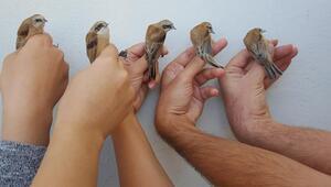 2 bin 239 kuş halkalandı