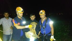 Su kuyusuna düşen köpeği AFAD kurtardı