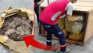 İstanbul Havalimanı'nda 1 ton 217 kilogram Pangolin pulu ele geçirildi