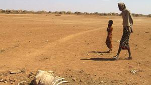 Etiyopyada bir günde 200 milyon fidan dikilecek