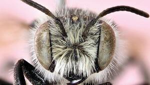 Türk arıya kıymayın