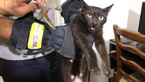 İnatçı kedi yakalandı