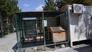 Sokak hayvanlarına klimalı konteynerde serinlik