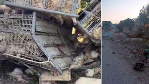 2 çocuk uyurken yaralandı... 1000 tavuk öldü